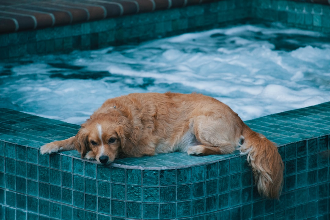 A dog swimming in a pool of water
